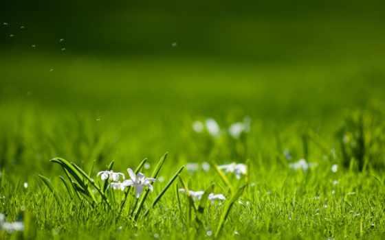 cvety, зелёный, поляна, природа, растения, травка, день, лес,