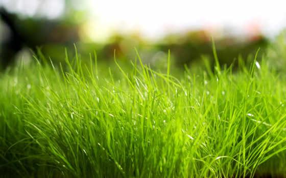 трава, природа, макро, природе, растения, зелёный, зелёная, яркий, установить, листочки,
