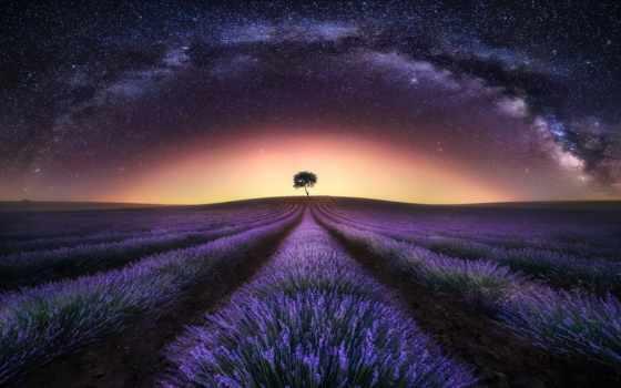 lavender, путь, млечный, поля, восход, покое, поле, душевном, everything,