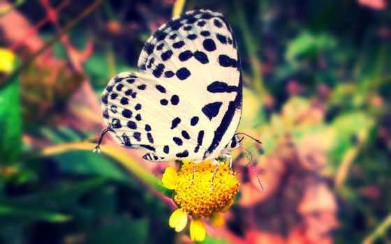 бабочка, природа, animal, white, black,