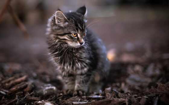 кот, tabby, браун, котенок, cute, feline, one