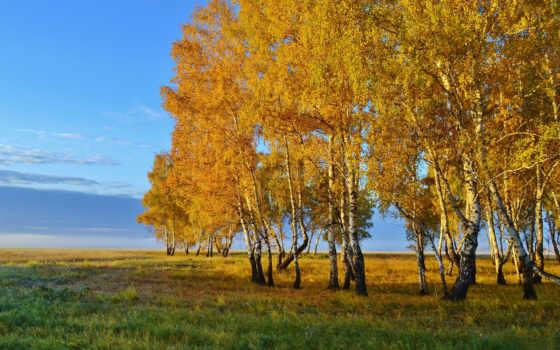 осень, картинка, природа