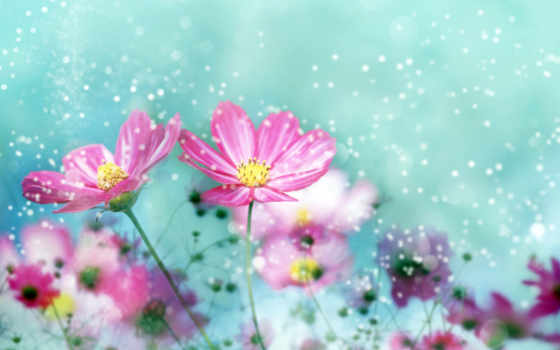 цветы, букет, ромашки, give, желаю, everything, рождения, днем, цветов,