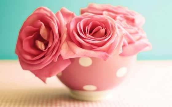 flowers, roses, розовый