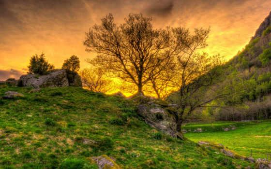 природа, ответы, лес, squad, игры, трава, картинка, рассветы, закаты,