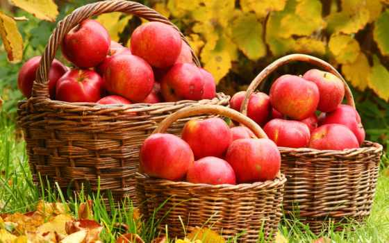 яблок, урожай, урожая, хорошего, секретов, которые, намерены, give, яблонь, текущем, secret,