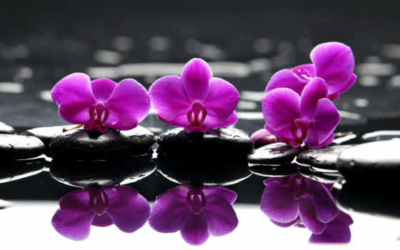 орхидеи, фотопанно, орхидея, фотообои, cvety, модульные, картины, доставка, фиолетовые, manufacture,