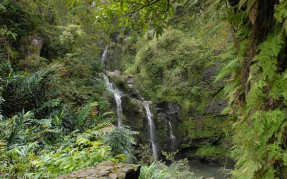 bg, falls, jungle, waikani, upper, palm, trees, листья, preview, природа,