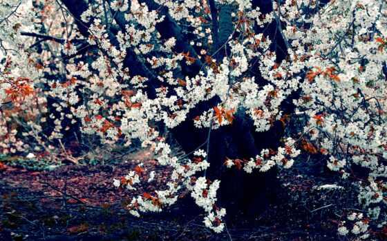 весна, desktop, фоны, trees, фон, любой, best,