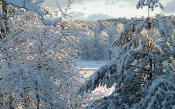 природа, игры, снег, winter, лес, новогодние, world, tanks, зимние, объект,