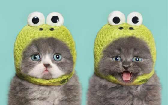 аккаунт, log, создать, ан, котенок, remember, кот