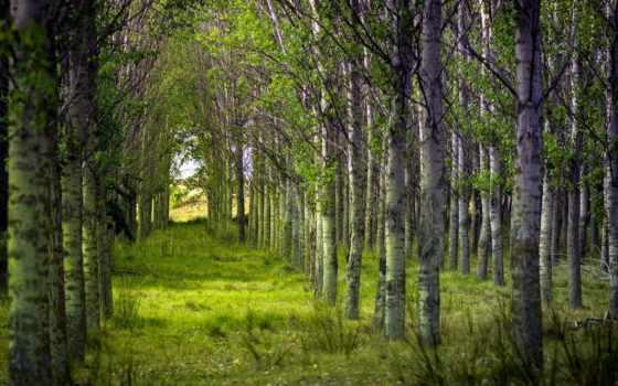 природа, лес, summer