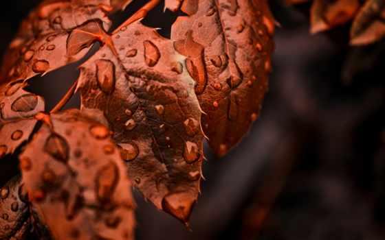 makro, osen, листья