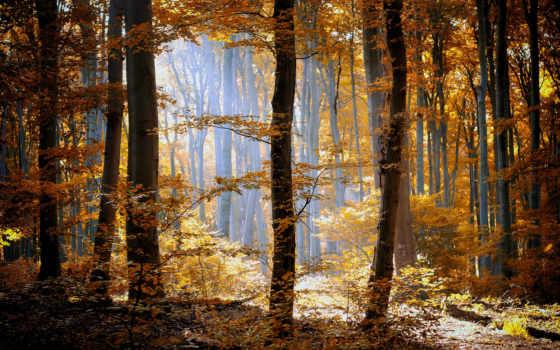 лес, листья, осень, деревя, оранжевые, туман, природа, желтые, трава,