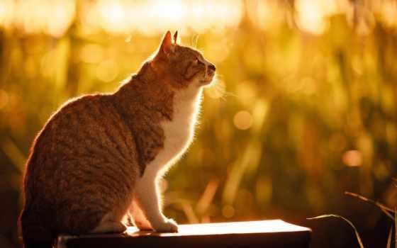кот, summer, морда