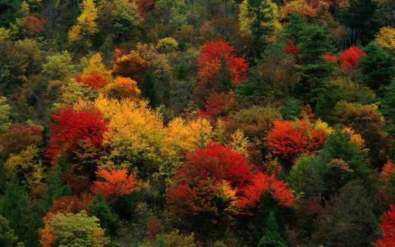 природа, осень, телефон, картинку, landscape, liveinternet, природы, становится, единственных, глазах, очаг,