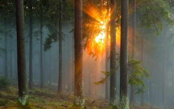 sun, туман, ray, trees, лес,