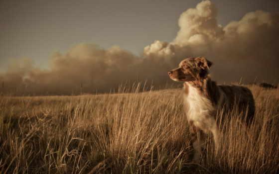 поле, друг, mobile, закат, zhivotnye, sony, собака, природа, landscape,
