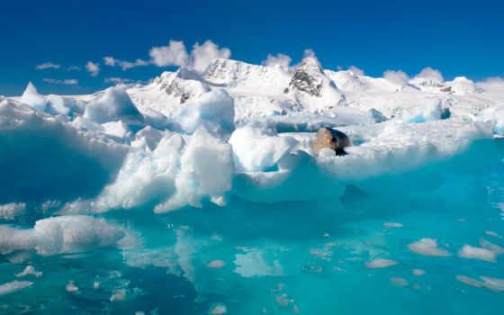 ocean, антарктида, снег, water, природа, north, льды, горы, тюлень,