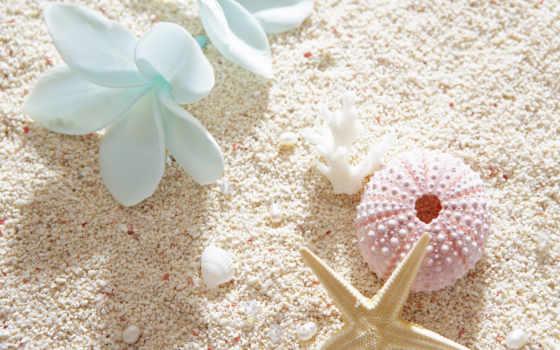 summer, cvety, широкоформатные, настроение, песок, ракушки,
