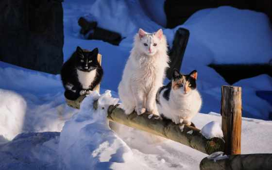 denigmo, loading, зимой, снег, оставить, лайков, дизлайков, чтоб, кошки,