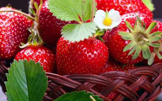клубника, ягоды, бесплатные