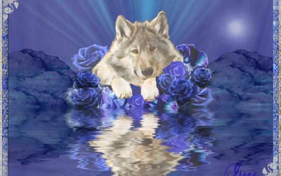 день, have, волк
