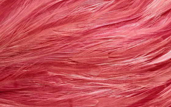 перья, текстуры, фламинго