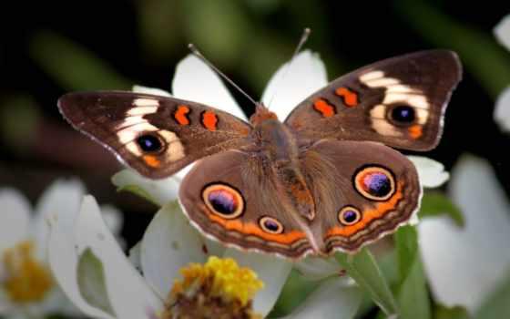бабочка, цветке, цветы