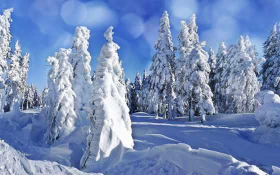 снег, елки, winter, сугробы, danbo, фоны, eli, категории, ветви, картинка,