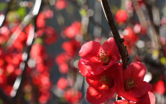 hoa, đáo, mai, ай, lên, nguyên, anh, huyết,