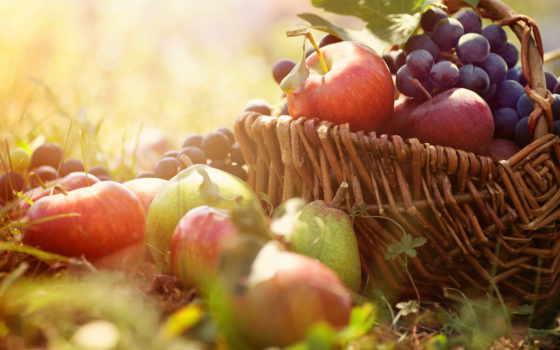 фрукты, fruits, корзина, яблоки, виноград, ягоды, блог, berries, juice, print, fresh,