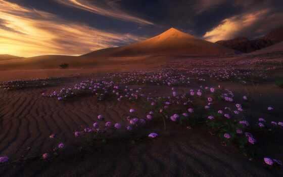 пустыня, landscape, природа, гора, цветы, песчаный, облако, свет