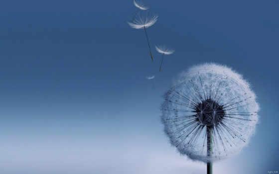 galaxy, dandelion