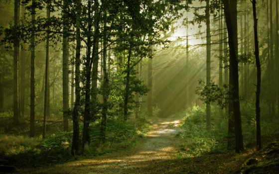 природа, лес Фон № 32189 разрешение 1920x1080