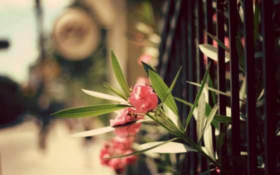 цветы, фон, природа