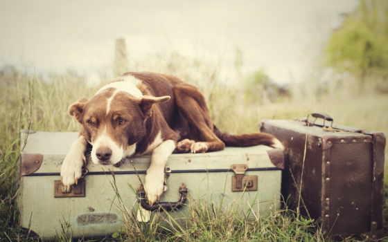 собака, грустная, лежит