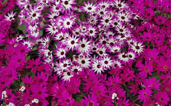 hành, nın, hoa, bạn, vũ, cho, cực, nhất, những, máy,