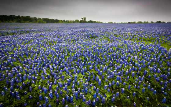 campo, flores, paisagem, parede, papel, natureza, paisaje, цветы, naturaleza,