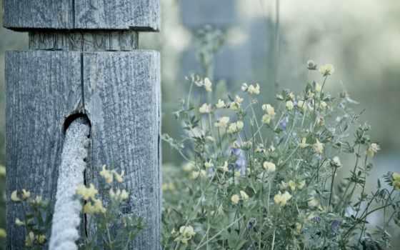 веревка, пост, дерево, pole, desktop, high, instagram,