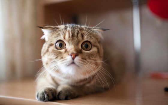 ,кошка, ушки, усы, глаза, усы,