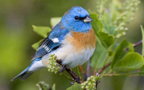 little, птица, birds, pinterest, об, images, pictures, blue, susan,