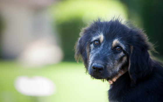 собака, грустная, грустные, собаки, собаку, кирово, утопил, печальным, ретушь, лучшая,
