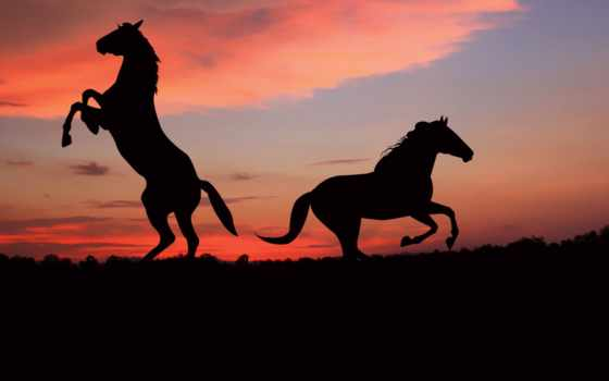 лошади, силуэт, shadow, закат, black,