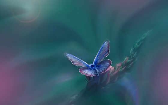 photography, макро, оставить, чтоб, дизлайков, лайков, бабочки, голубые,