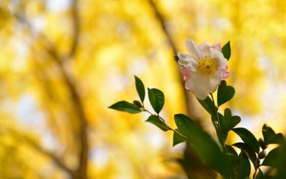 цветы, cvety, white, розовый