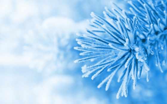 голубой, макро, разделе, зима, snow, елка, ёль,
