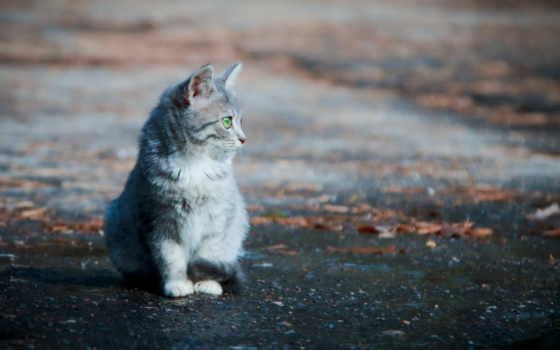улица, кот, одиночка