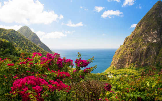 горы, цветы, природа
