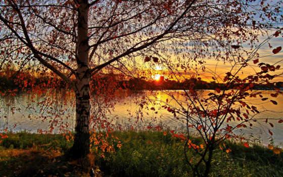 береза, осень, trees, озеро, природа, лес, ярославль, russian, березы,